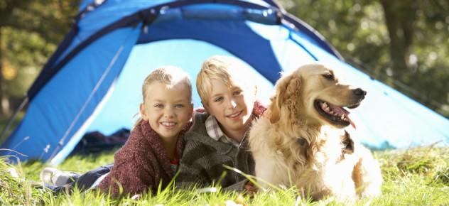 Dog Friendly Caravan Parks Cornwall Padstow