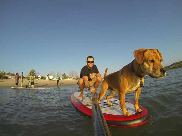 curious-dog-on-a-standup-paddleboard