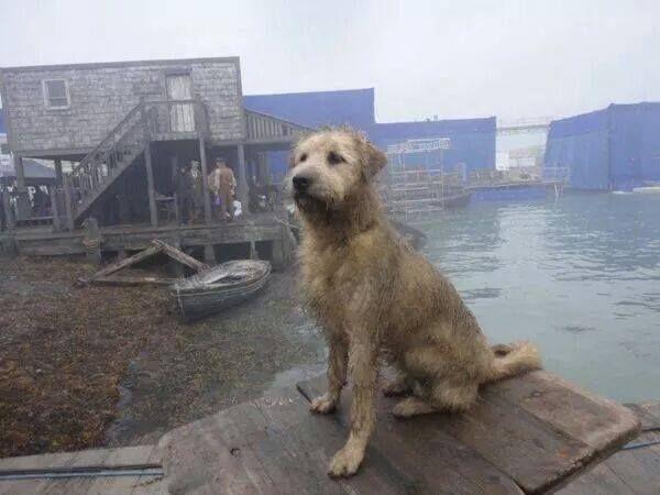 What Breed Of Dog Is Garrick In Poldark